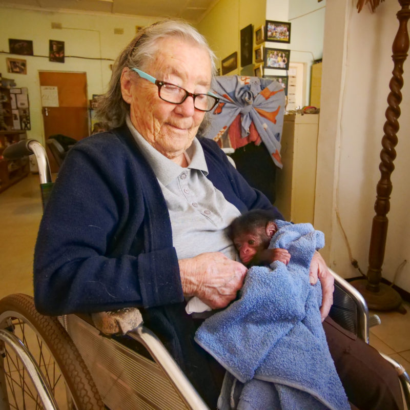 Sheila Siddle cuddles Baby Joey